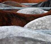 Les croupes - 2012 - Guy Bouquier