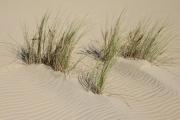 Ile d'Oléron, dune