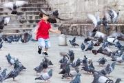 JMD_enfant aux pigeons.jpg